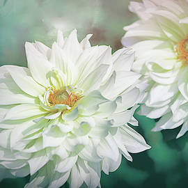 Two White Dahlias by Julie Palencia
