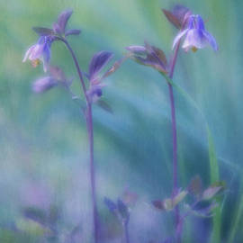 Two Wild Columbines by Priska Wettstein