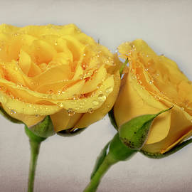 Two Yellow Roses by Sandi Kroll