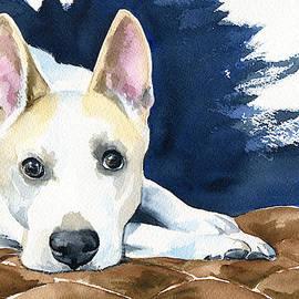 Ty Dog Portrait by Dora Hathazi Mendes
