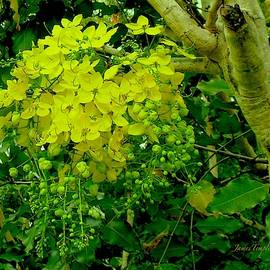 Under The Golden Shower Tree by James Temple