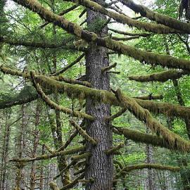 Upright Range Moss by Dylan Punke