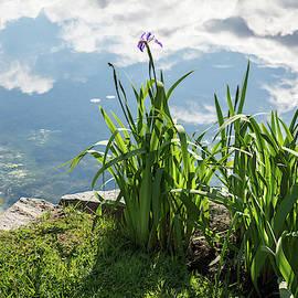 Upside Down Skyscape - Glossy Pond and Irises by Georgia Mizuleva