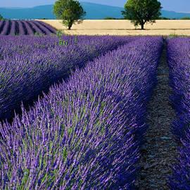 Valensole Lavender Field by Brian Jannsen