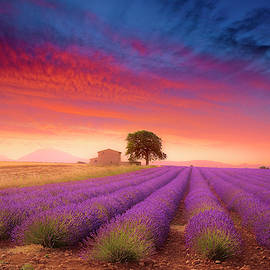 Valensole Plateau by Giovanni Allievi