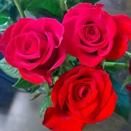 Valentine Roses  by Gayle Miller
