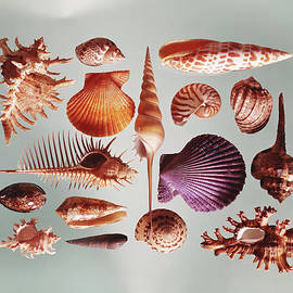 Various Sea Shells On Grey Background by Tom Kelley Archive