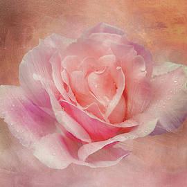 Velvet Pink Rose by Terry Davis