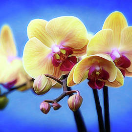 Vibrant Orchids by Diana Haronis