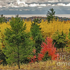 Vibrant Shades Of Red, Green, And Yellow Leaves by Sue Smith