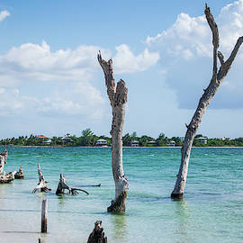 View of Captiva from Cayo Costa by Mary Ann Artz