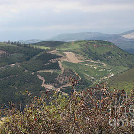 View Of Simi Valley From Reagan Library Grounds 9 by Colleen Cornelius