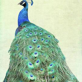 Vintage Peacock by Sabrina L Ryan