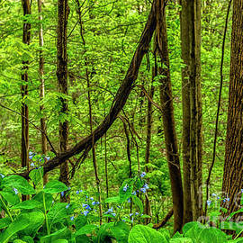 Virginia Bluebells And Tree Trunks by Thomas R Fletcher