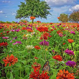 Vivid Monarch Days in the Garden  by Lynn Bauer