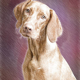 Vizsla-DWP3277414 by Dean Wittle