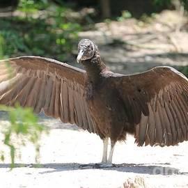 Vulture Wings by Carol Groenen