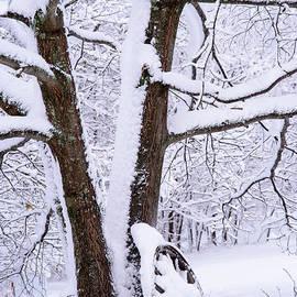 Alana Ranney - Wagon Wheel Snowy Scene
