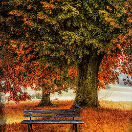 Waiting for You in Autumn by Debra and Dave Vanderlaan