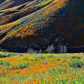 Walker Canyon Poppy Meadow by Glenn McCarthy Art and Photography