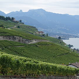 Walking Path Through Lavaux Vineyards by Patricia Caron