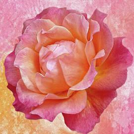 Warm and Crunchy Rose by Dennis Buckman