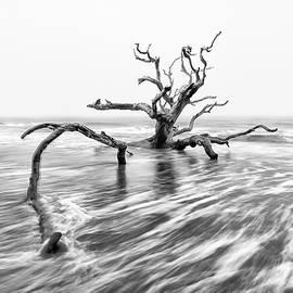 Ray Silva - Washed Ashore