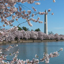 Washington Monument from the Tidal Basin DS0063 by Gerry Gantt