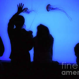 Jeff Breiman - Watching Jellyfish