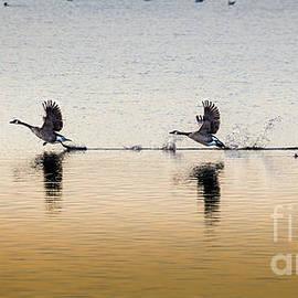 Water Landing by Morey Gers