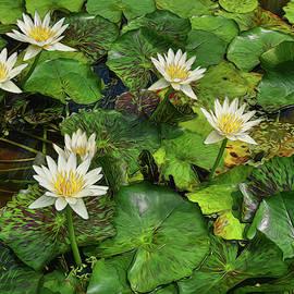 Water Lillies 16 by Allen Beatty