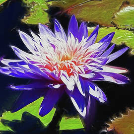 Water Lily 21 by Claude LeTien
