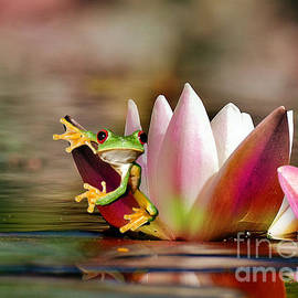 Water Lily and Frog by Morag Bates