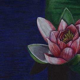 Jay Johnston - Water Lily and Pad