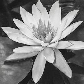 Water Lily Monochrome by Teresa Wilson