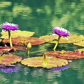 Waterlily Garden at Gibbs Gardens by Mary Ann Artz