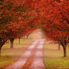 Way To The Farm by Rima Biswas