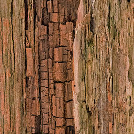 Weathered Wood by Ira Marcus