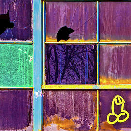Weenie On A Window by Robert FERD Frank