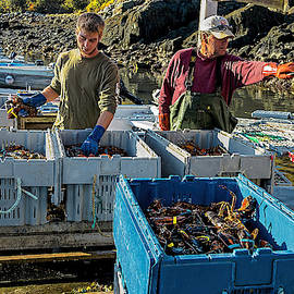 Weighing In The Lobster Catch by Marty Saccone