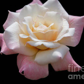 What A Beautiful Rose by Sabrina L Ryan