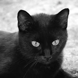 When is Halloween In Black And White by Chris Mercer