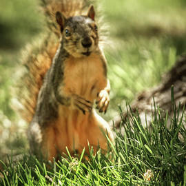 Where Is Peanut by Robert Bales