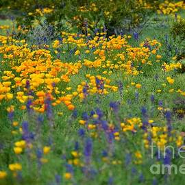 Whimsical Wildflowers by Janet Marie