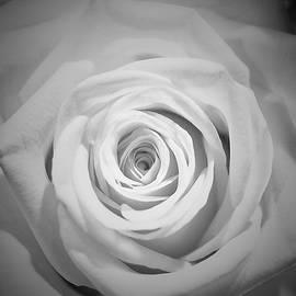 WhirlPool White by Alida M Haslett