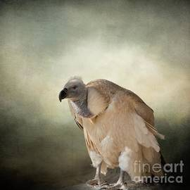 White-Backed Vulture by Eva Lechner