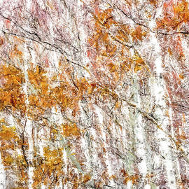 White Birches  by Susan Cole Kelly