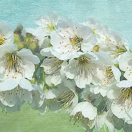 White Cherry Blossoms Branch by Isabela and Skender Cocoli