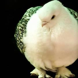 White Dove by Kathy Gail