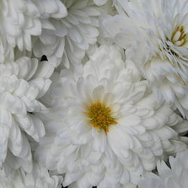 White Flowers Always by Paul - Phyllis Stuart